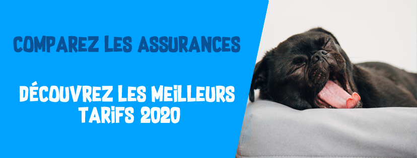 assurance animaux compagnie